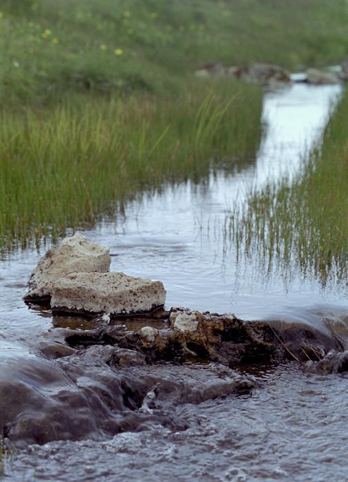 Babbling brook flowing through reeds