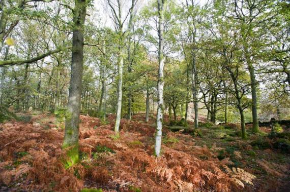 Autumn or fall woodland landscape