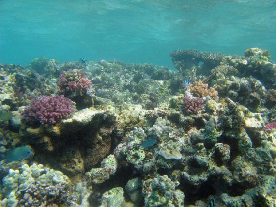 Underwater Scape